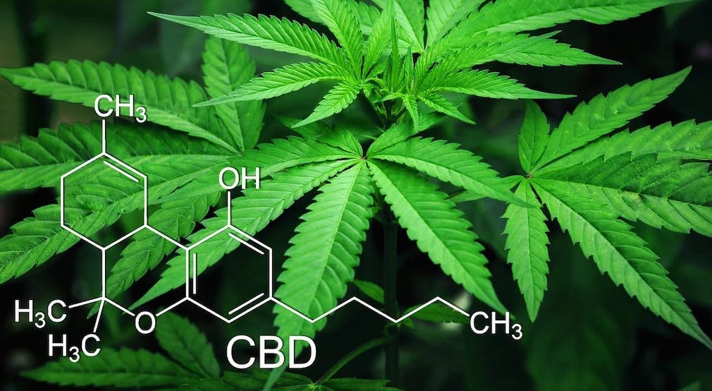 This image has an empty alt attribute; its file name is cbd-2-2.jpeg